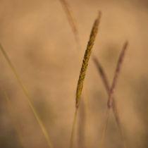 Grasflüstern by piri