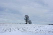 Winterwunderland by Katrin Lübeck