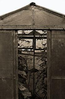 Folientreibhaus von Michael Guntenhöner