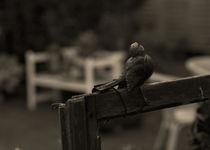 Ich wollt, ich wär ein Vogel von Michael Guntenhöner