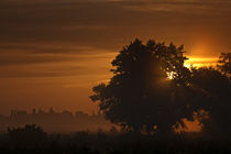Morgensonne by Michael Krämer