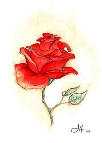 Rose von Harald Hüttl
