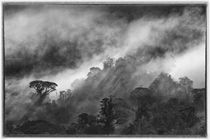 Cloud Forest Disappeared by Gregory Basco