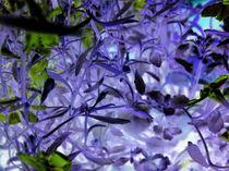 Die blaue Dschungelmelodie von Wolfgang Wende