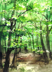 Sommerspaziergang im Wald