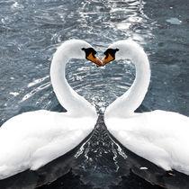 Swan-Love von Michael S. Schwarzer