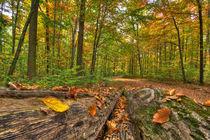 Herbstwald by Michael S. Schwarzer