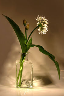 BÄRlauch  Allium ursinum by pichris