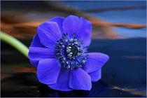 Blauer Rausch by pichris