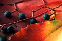 Herbstfarben von pichris