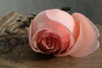 rosa ROSE von pichris