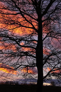 Winterbaum im Abendlicht - Winter Tree in evening light by ropo13
