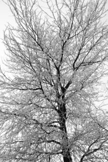 Eisbaum - ice tree by ropo13