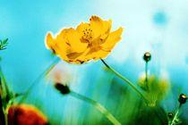 Gelbe Blume  by Wildis Streng