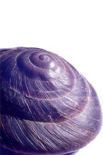 Blaue Schnecke by Wildis Streng