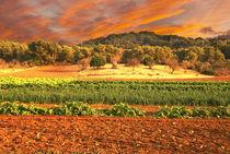 Landschaft auf Mallorca von pahit
