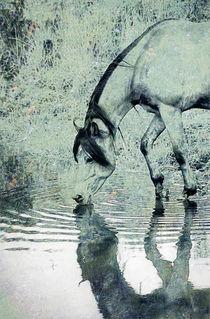 Spiegelbild von pahit