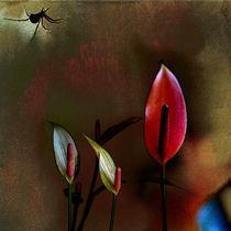 Stillleben Spider Square 1 von pahit