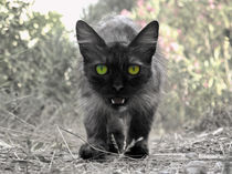 Katze auf der Pirsch  by pahit