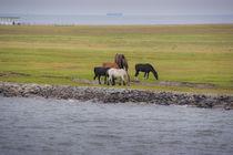 Pferde auf Neuwerk von pahit