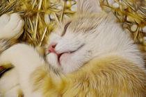 Kleine Katze träume süß! by pahit