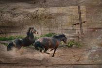 Zwei Pferde von pahit