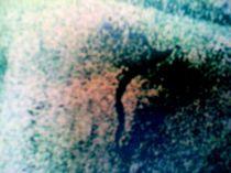 seltsame gestalten in nebelwelt by lisa winter