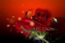 blüten im sonnenwind by nora gharbi