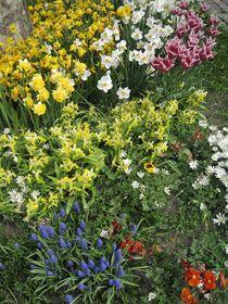 Blumenmeer im Frühling von Anne Rösner-Langener