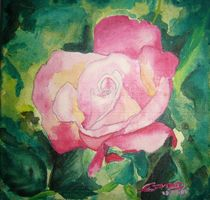 Rose by Edmond Marinkovic