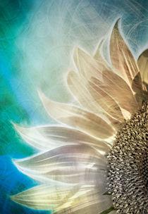Sonnenblume von Städtecollagen Lehmann