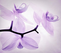ORCHIDEE  by Städtecollagen Lehmann