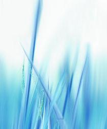 Gräser  von Städtecollagen Lehmann