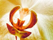 Orchidee  von annette nettesart