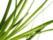 Gras  von Städtecollagen Lehmann