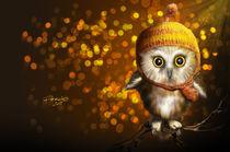 OWL by Fernando Rodriguez