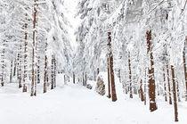 Winterwald by Wolfgang Dufner
