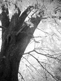 Pict0099-tree-2