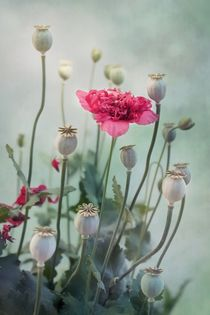 Pods, Buds & Flowers by Priska  Wettstein