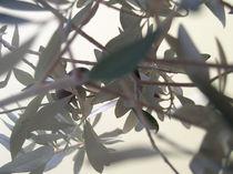 Olivenblätter von Ilona Metscher