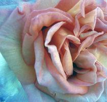 Rose von Ilona Metscher