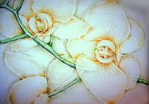 Orchideen by Olga Hamann