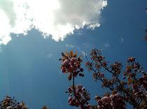 Blütenhimmel by Rainer Theobald