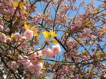 Blatt und Blüte von Rainer Theobald