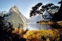 Neuseeland - Milford Sound von Frank Seidel