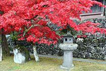 Japan - Herbstlaubfärbung von Frank Seidel
