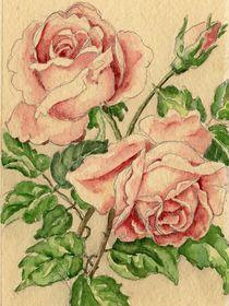 Rose Original von Norbert Hergl