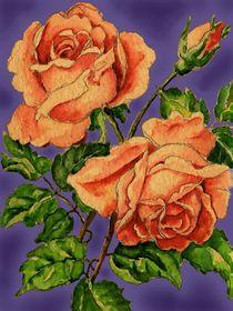 Rose Edit von Norbert Hergl