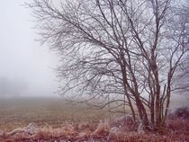 Frostige Tage 06 - Frosty Days 06 von Norbert Hergl