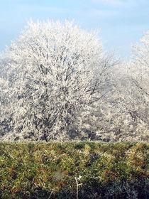 Frostige Bäume - Frosty Trees von Norbert Hergl